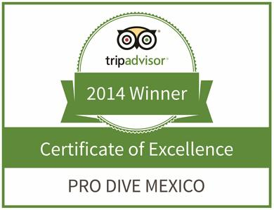 Pro Dive Mexico - Certificate of Excellence