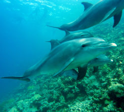 Dolphin protection projects at boot Düsseldorf / Foto: pixabay