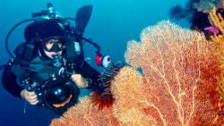 Introduction to underwater photography / Foto: cebufundivers
