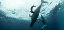 Foto: © International OCEAN FILM TOUR
